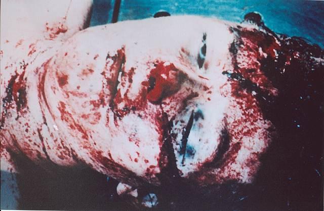 [Image: Autopsy-Colette01.jpg]